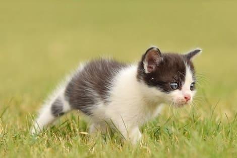 gatto-nel-prato
